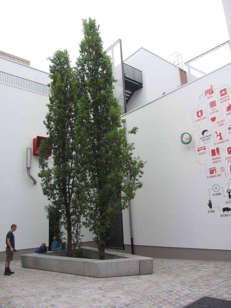 bomen-aanplanten-bestrating-01