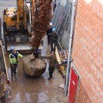 bomen-aanplanten-bestrating-03