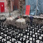 bomen-aanplanten-bestrating-08