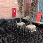 bomen-aanplanten-bestrating-09