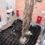 bomen-aanplanten-bestrating-10
